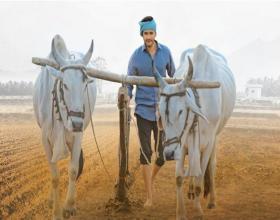 Pic Talk: Mahesh as Farmer